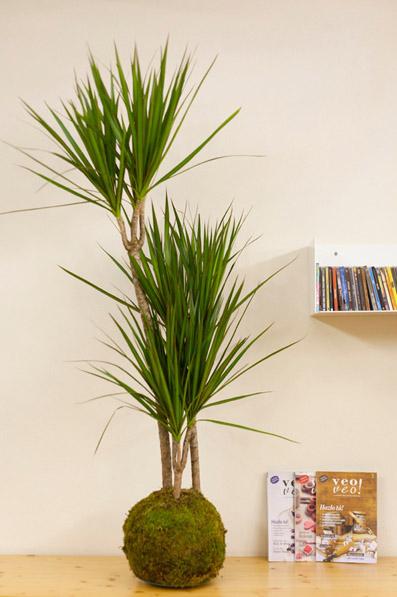 decoración de evento con planta kokedama